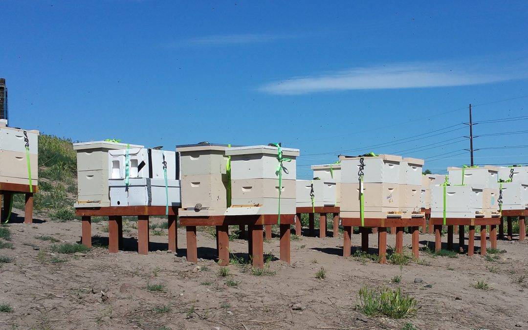 Bees4Vets apiary June 4 2018
